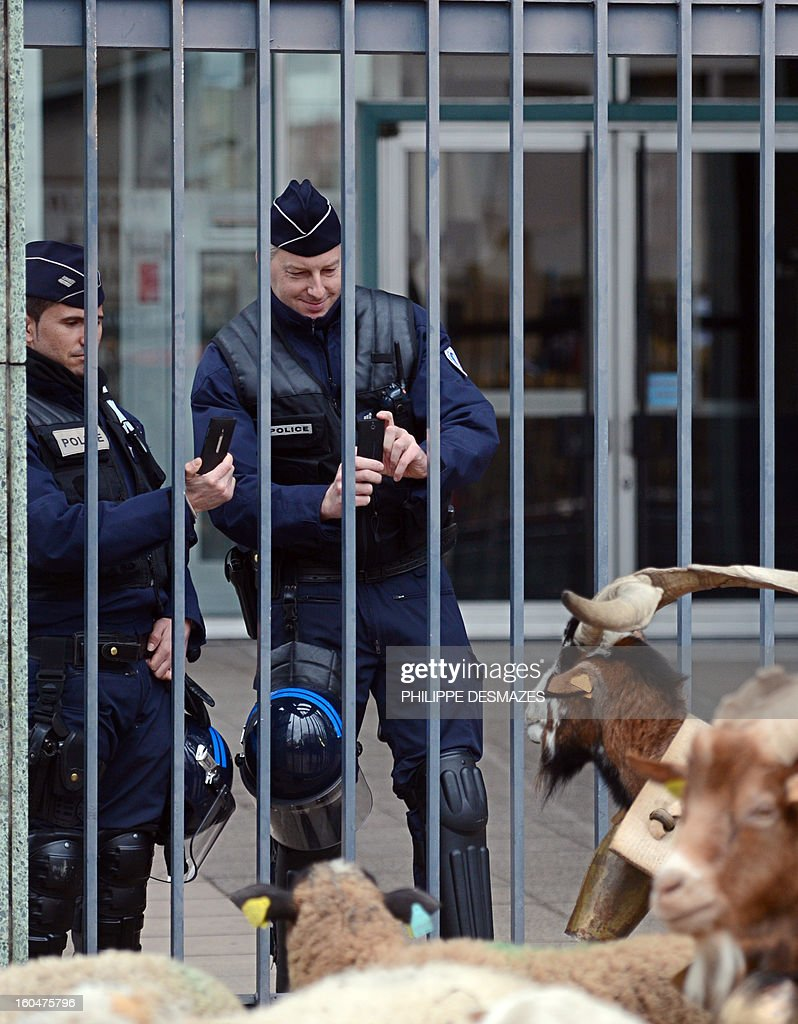 French policemen take pictures of a billy goat with their cell phones during a demonstration by French and German shepherds with a flock of ewes, on February 1, 2013, in a street of Valence, southeastern France, as they protest against the electronics chip RFID (Radio Frequency Identification) system imposed on their animals. The shephards are protesting over the mandatory tracking of all of their animals with electronic chips after new European Union legislation passed to impose this on all animals born since 2010.