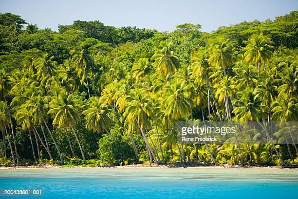 French Polynesia, Bora Bora, palm trees along shoreline