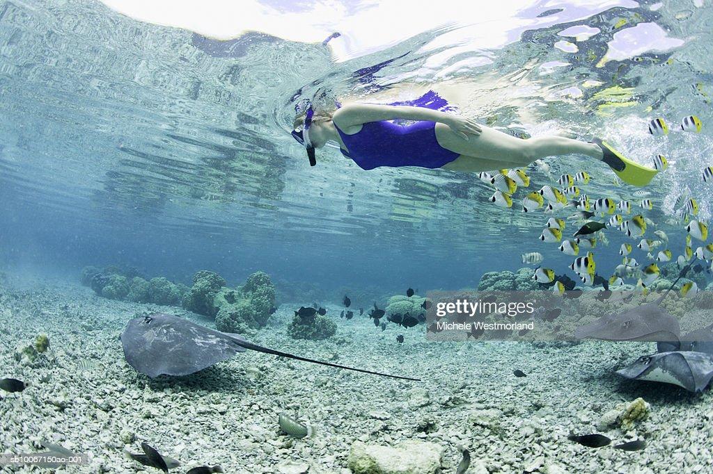 French Polynesia, Bora Bora, Woman snorkelling in sea, side view