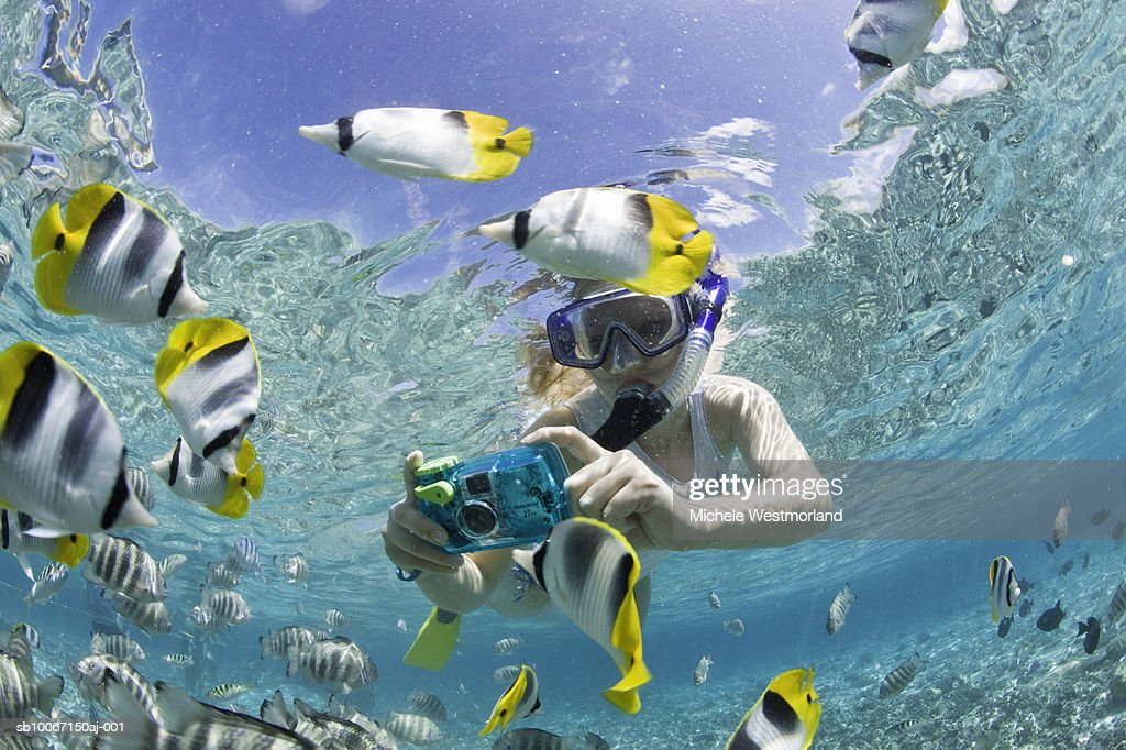 French Polynesia, Bora Bora, Woman taking underwater pictures of colorful reef fish : Stock Photo