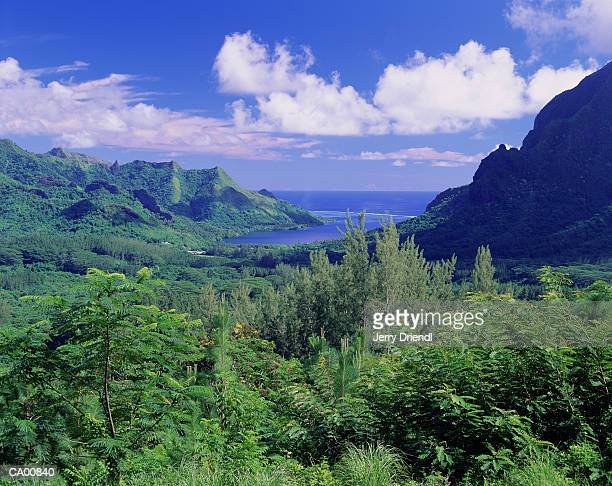 French Polynesia, Moorea, Opunohu Bay, elevated view