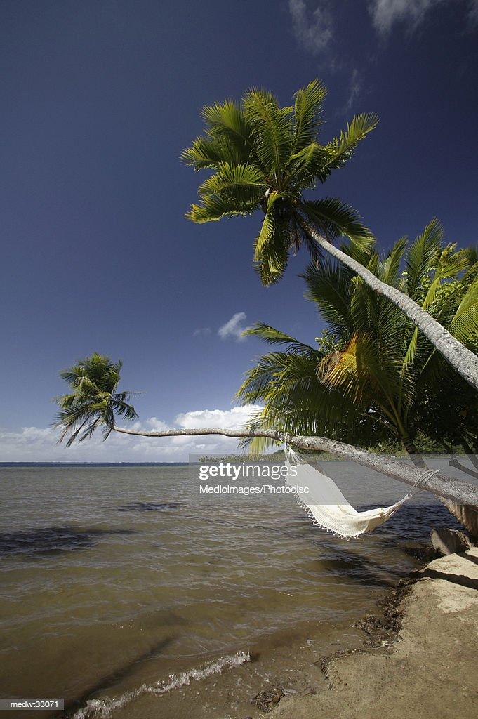 French Polynesia, Raiatea Island, Palm trees on a beach