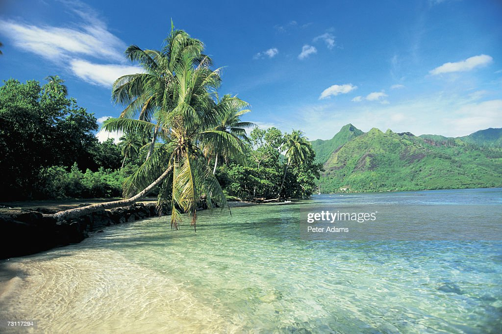 French Polynesia, Tahiti, Moorea, Palm trees over tropical beach : Stock Photo