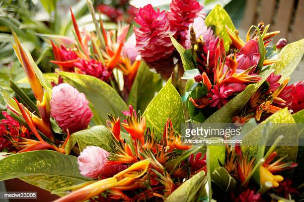 French Polynesia, Tahiti, Papeete, Close-up of a tropical flowers bouquet