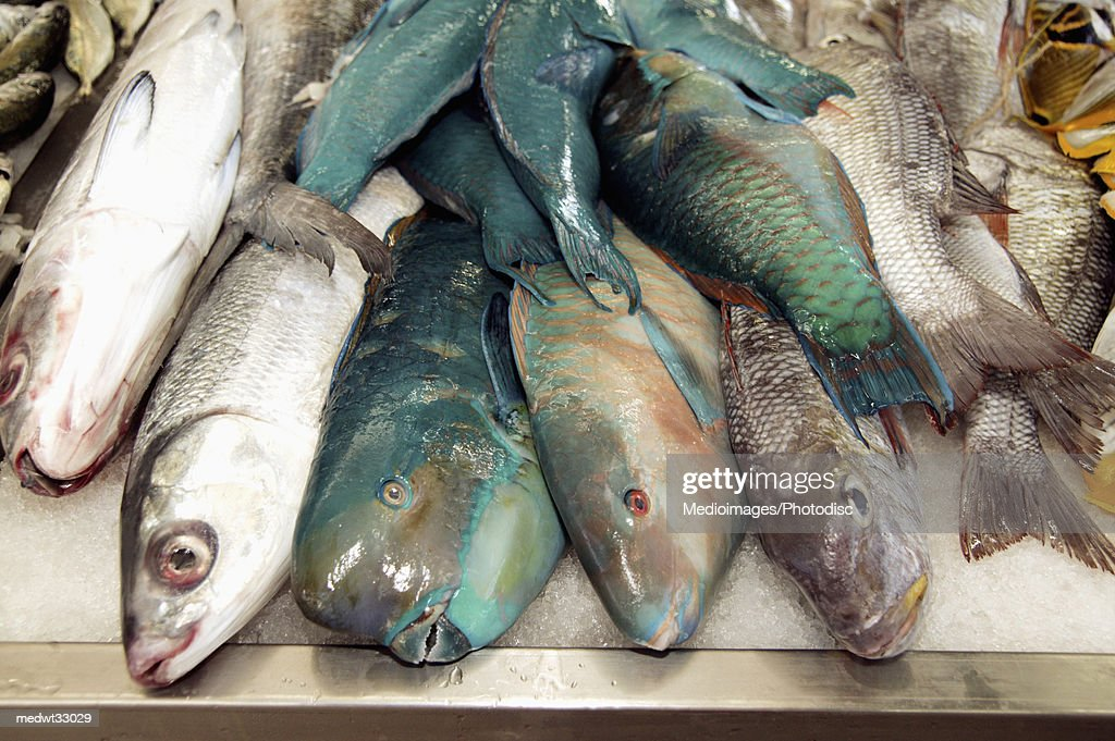 French Polynesia, Tahiti, Papeete, Local fish market : Stock Photo