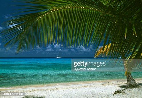 French polynesia tuamotu archipelago rangiroa atoll ki ora for Rangiroa urlaub