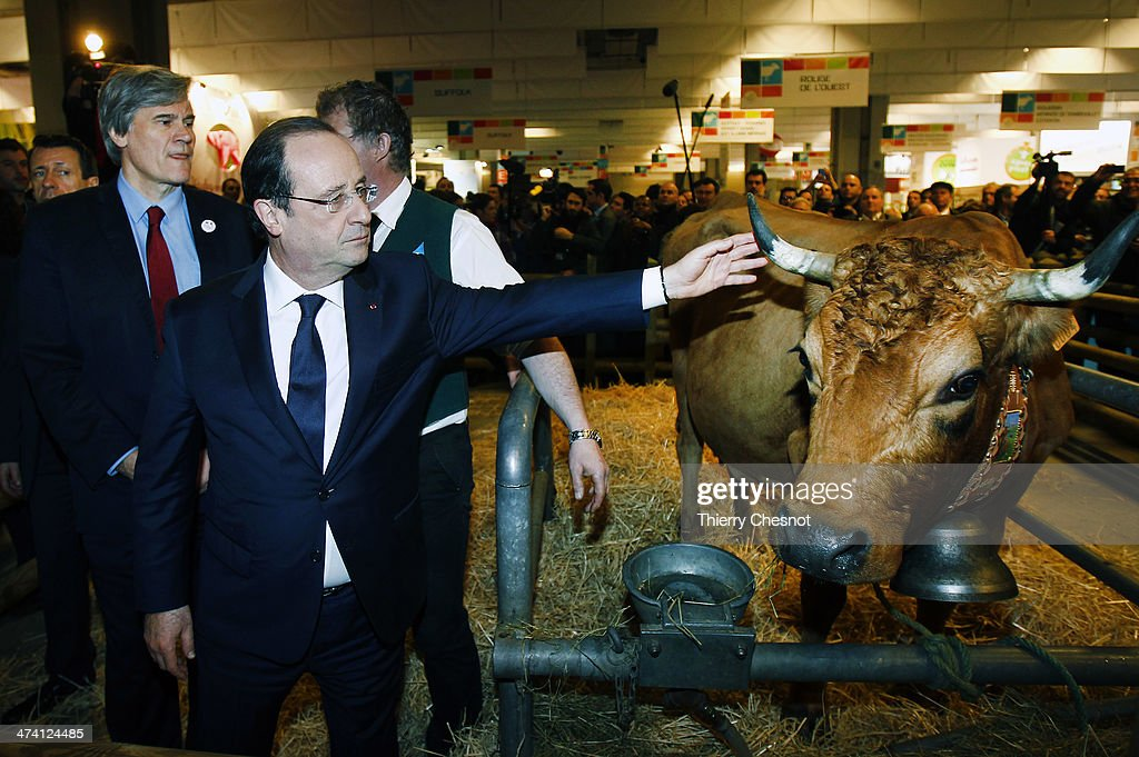 French President Francois Hollande with French Agriculture Minister Stephane Le Foll (L) holds the horn of a cow named 'Bella 7 hold' during a visit of the Paris The International agricultural fair at the Porte de Versailles exhibition centre on February 22, 2014, in Paris, France. The International agricultural fair opens from February 22 until March 2, 2014.