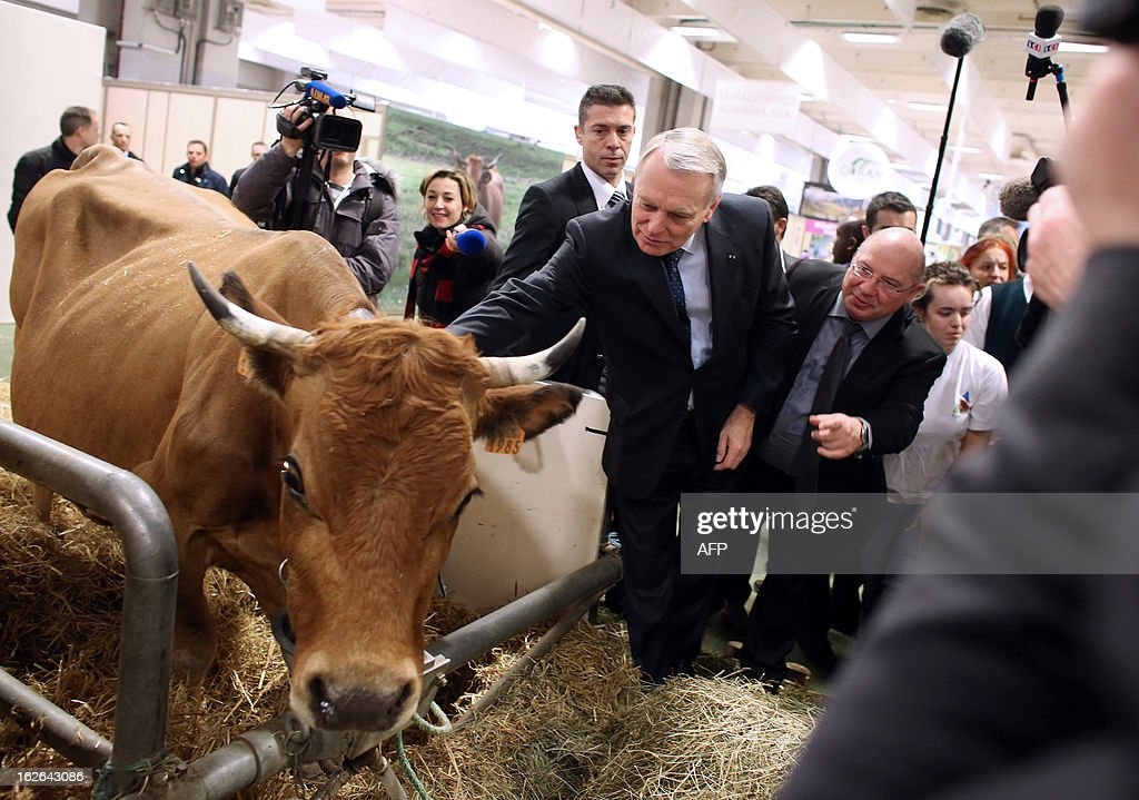 French Prime Minister Jean-Marc Ayrault (C) pets a cow during a visit of the International Agriculture Fair of Paris at the Porte de Versailles exhibition center, on February 25, 2013 in Paris. Some 1,300 exhibitors and 4,000 animals attend the fair which runs from from February 23 to March 3, 2013.