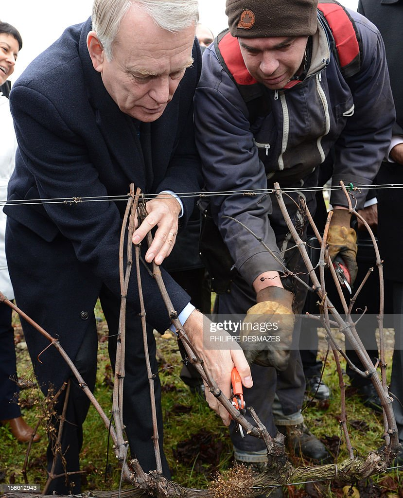 French Prime Minister Jean-Marc Ayrault (L) prunes a vine with the help of a farmhand at a vineyard in La Roche-de-Glun near Valence as part of a visit on the theme of agriculture on December 21, 2012.