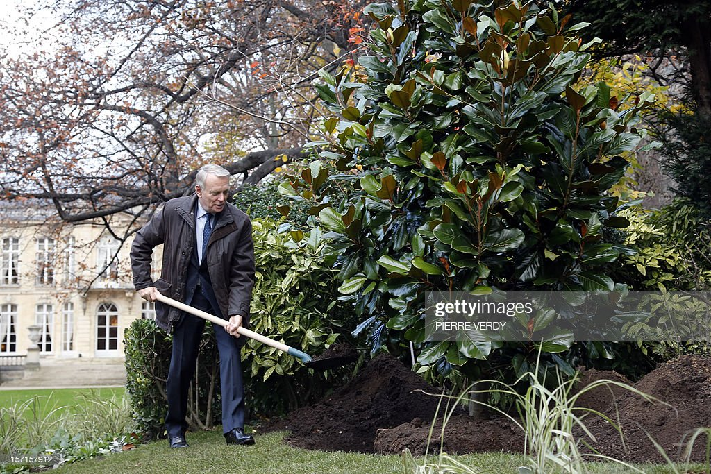 French Prime Minister Jean-Marc Ayrault shovels dirt during a tree planting on the grounds of Hotel Matignon in Paris on November 29, 2012.