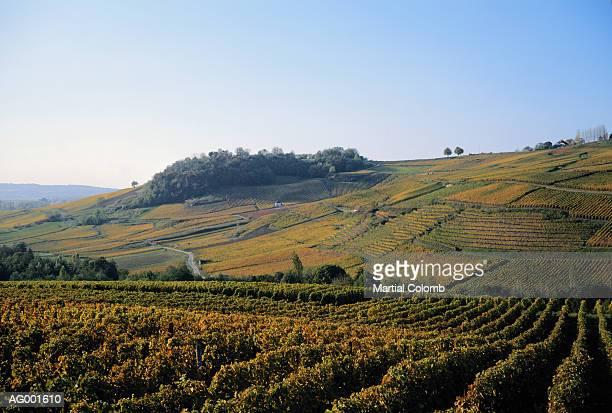French Vineyard Landscape
