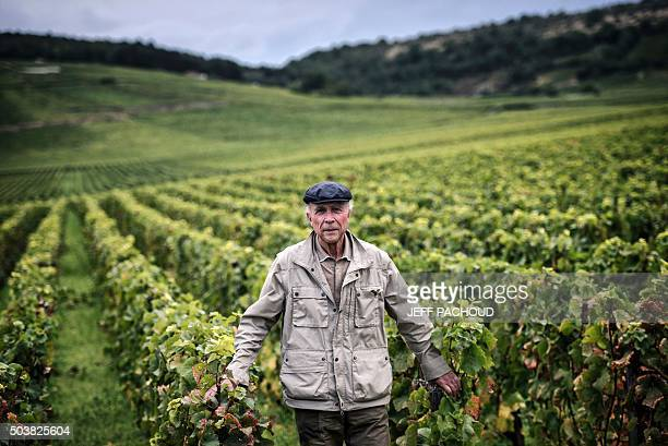 French winemaker Aubert de Villaine poses on September 16 2015 in a vineyard in VosneRomanee centraleastern France Auber head of the prestigious...