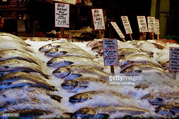 Fresh Alaska Salmon on Ice