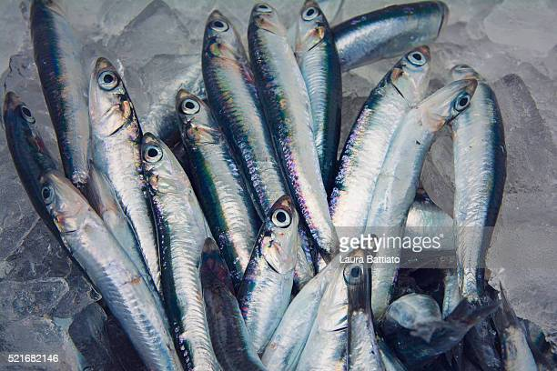 Fresh anchovies in the fish market