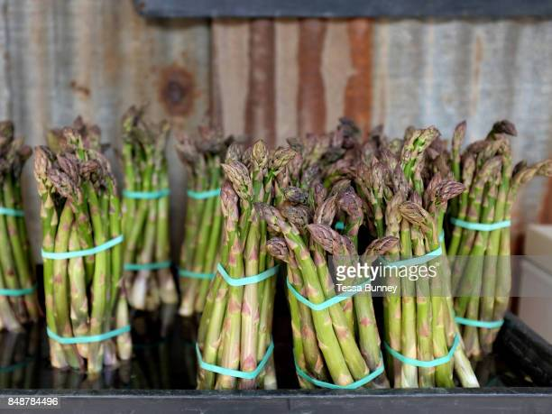 Fresh asparagus for sale at the farm gate at Sand Hutton Asparagus in North Yorkshire United Kingdom om 18th May 2017