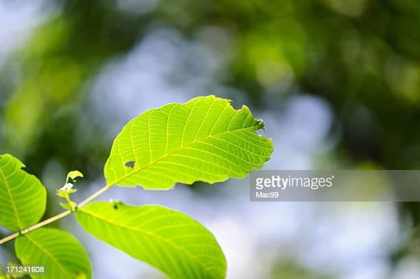 Des œuvre de plantes