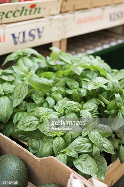 Fresh basil in a crate at a market