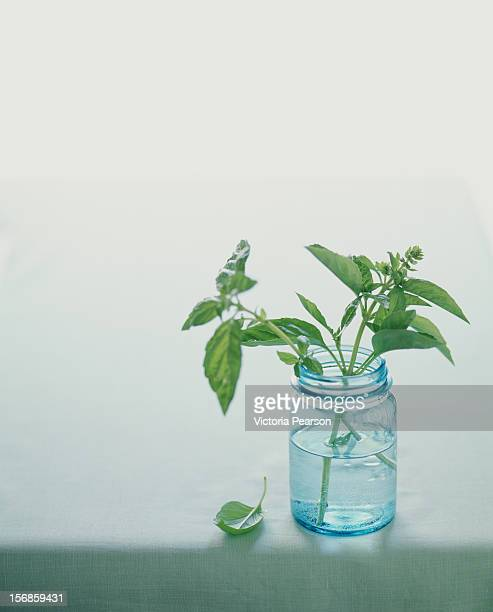 Fresh basil in a jar of water.