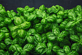 Fresh basil on a dark background. Green basil. Fresh basil on a dark background. Green basil. Food background. A lot of basil