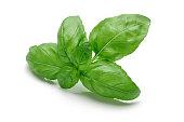Fresh leaves basil isolated on white background