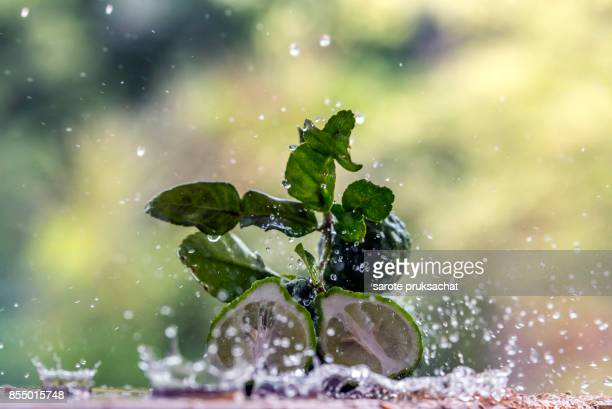 Fresh Bergamot and water splash .