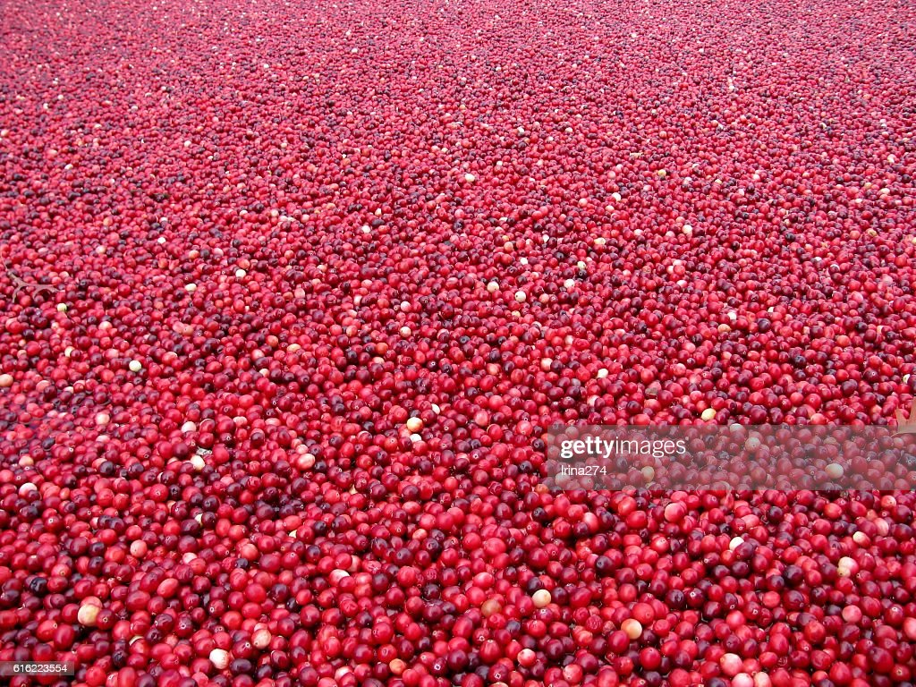 Fresh berries floating in cold water : Stock-Foto