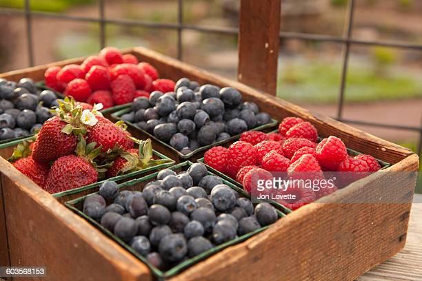 Fresh Berries on the farm