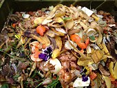 Fresh bio-waste and compost in the garden