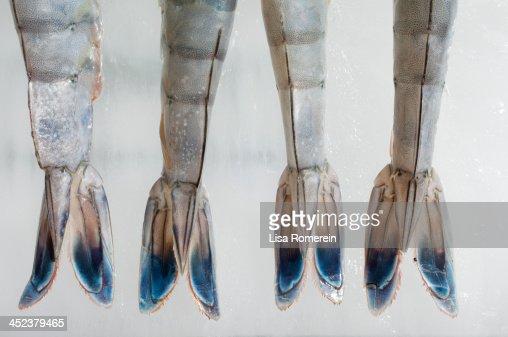 Fresh blue tip shrimp tails on ice : Stock Photo