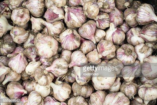 Fresh bulbs of garlic. Background : Stock Photo