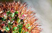 fresh rain drops on green cactus