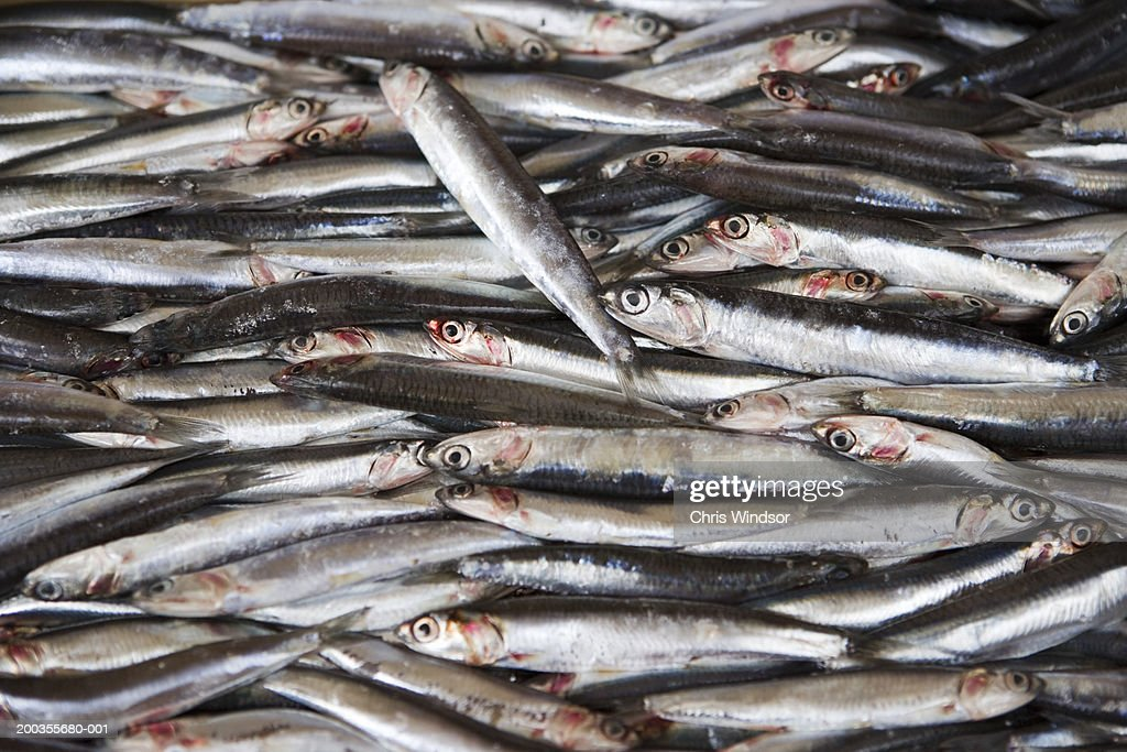 Fresh catch of whitebait, close-up, elevated view