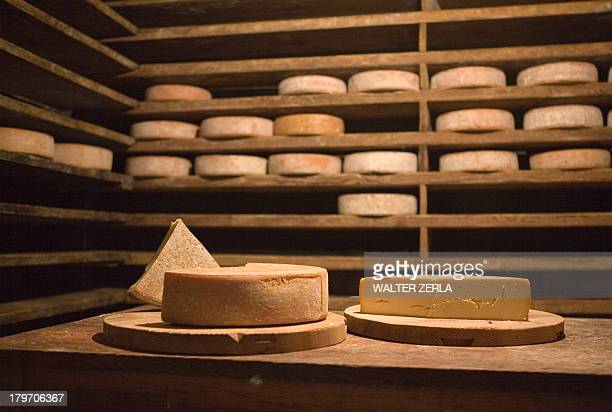 Fresh cheese wheels on table in cabin