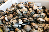 Fresh clams for sale in the market. Close up. Venerupis pullastra