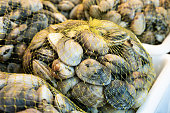 Fresh clams on mesh bag for sale in the market. Bivalve mollusk from Galicia, Spain. Venerupis pullastra