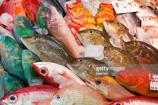 Fresh colorful tropical fish at the market, Japan