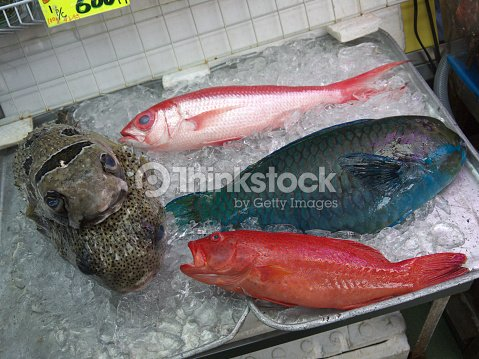 Fresh Colorful Tropical Fish On Ice For Sale On Makishi Public