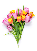 Fresh colorful tulip flowers bouquet. Isolated on white background