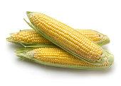 Fresh corn ears