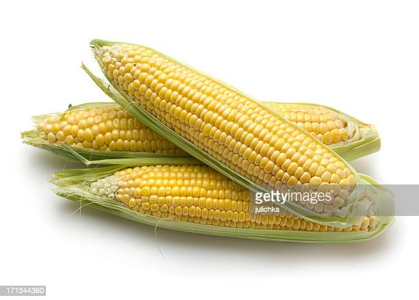 Fresh corn ears