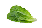 fresh cos lettuce leaf isolated on white background