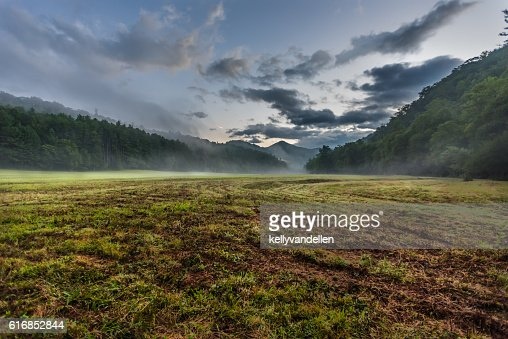 Fresh Cut Grass in Foggy Valley : Stock Photo