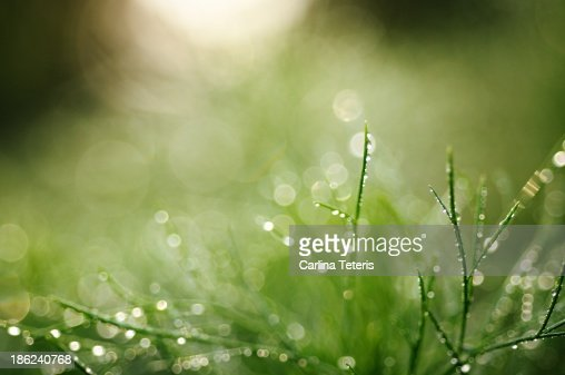 Fresh dewy grass