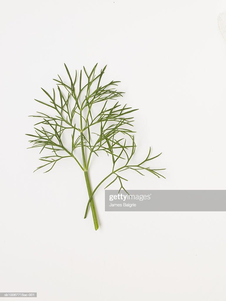 Fresh dill on white background : Stock Photo