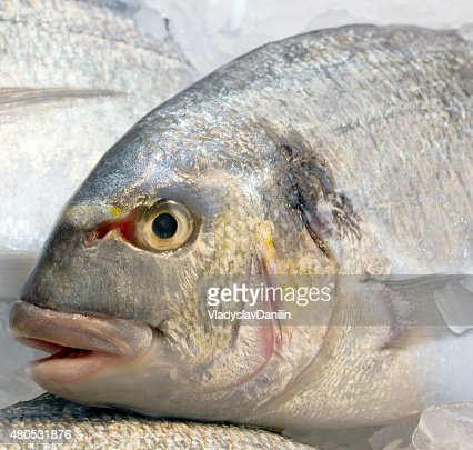fresh dorado fish on ice : Stock Photo
