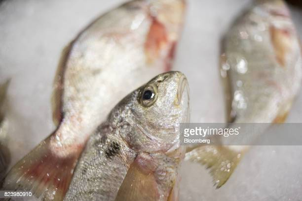 Fresh fish are displayed for sale inside the New Fulton Fish Market Cooperative at Hunts Point Inc in the Bronx borough of New York US on Thursday...
