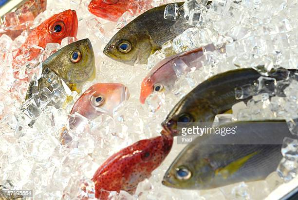Fresh Fish at the market, displayed on ice