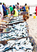 fresh fish for sale at african beach