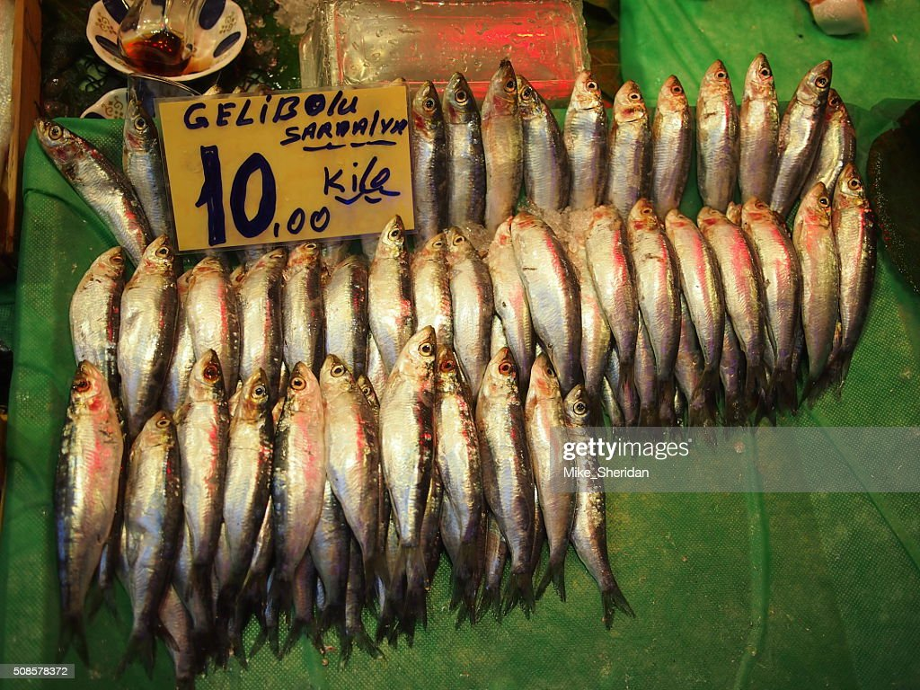 Fresh fish for sale at market : Stock Photo