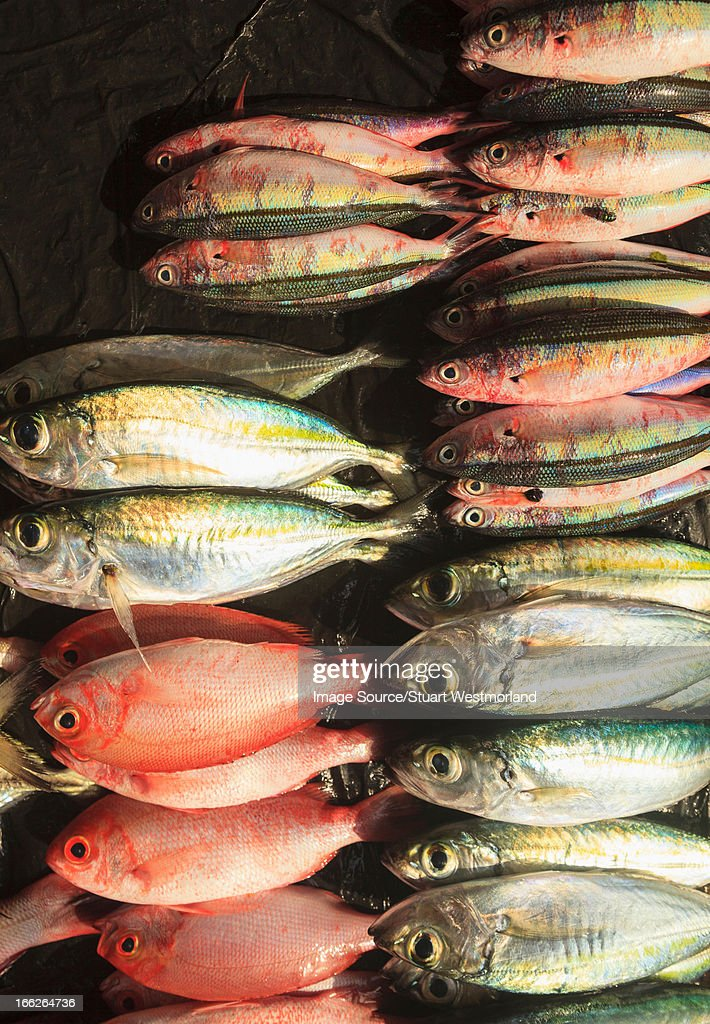 Fresh fish for sale in market stock photo getty images for Stock fish for sale